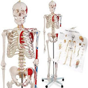 Learn Anatomy Video Lectures