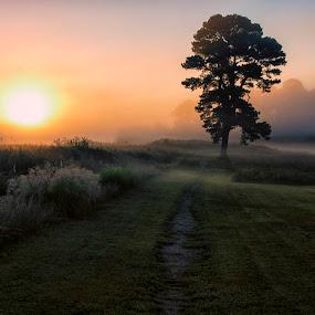 Morning on the Battlefield by James Gramm - Landscapes Sunsets & Sunrises ( grasses, battlefield, tree, fog, virginia, sunrise, morning, landscape, yorktown, mist )