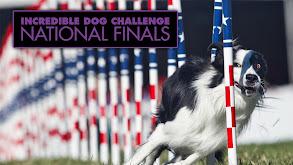 Incredible Dog Challenge National Finals thumbnail