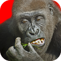 Flying Gorilla icon