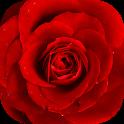 Floristry icon
