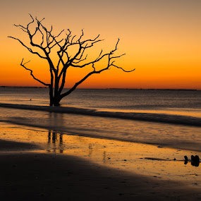 Botany Bay Boneyard by Serge Skiba - Landscapes Sunsets & Sunrises ( edisto, botany bay, art, fine art, beach sunrise, canvas, seascape, ocean sand, print, south carolina, sun )