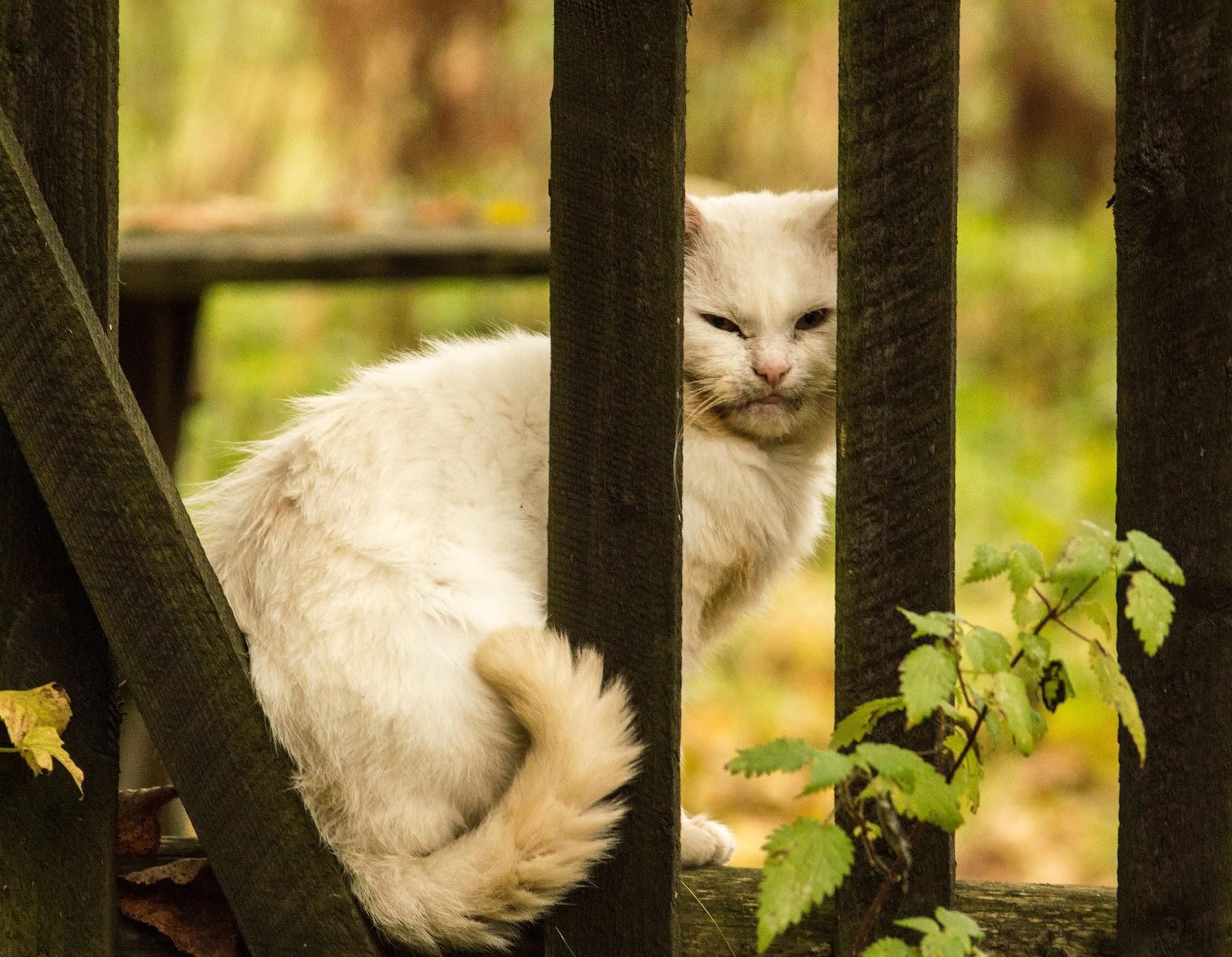 Кіт в Мислівці