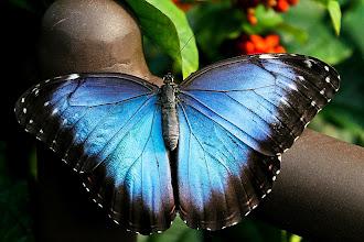 Photo: Powdered Blue