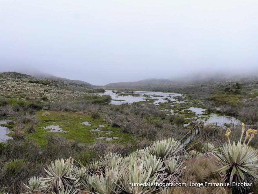 Laguna seca, Páramo de Chingaza