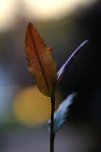 Photo: last leaves of autumn
