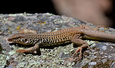 Photo: 148. Lizards are pretty good about not scurrying away. This one stayed motionless for a long time.