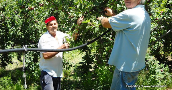 2010-07-11 Azienda Monte