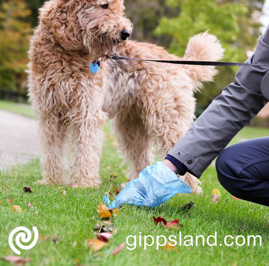 Picking up your pet's poop when you bring it out in public helps in keeping the community safe from harmful microorganisms, and to also keep you from getting a fine