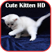 Cute Kitten HD Wallpaper Icon