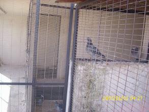 Photo: Vista del pasillo de palomares de cría.