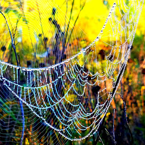 Web of hammock by Vijay Govender - Nature Up Close Webs ( spiderwebs, nature, webs, dewdrops )