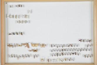 Photo: ZSM-HD-0001490 Various Ichneumonidae indet.