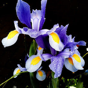 by Claudio de Freitas Photography - Flowers Flower Gardens ( mobilography, london, mobile photos, colors, photographer, claudidefreitasphotography, photography, photoshop, photooftheday,  )