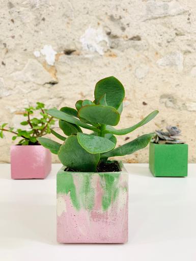 plante dans pot design en béton orange