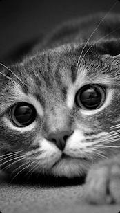 New animal sounds HD - náhled