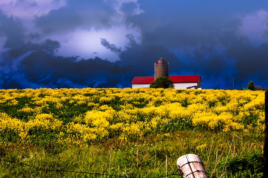 Yellow Meadow by Eugene Linzy - Landscapes Prairies, Meadows & Fields ( field, fence, pasture, barn, meadow, storm clouds, yellow, silo, rural )