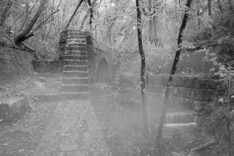 Il ponte nel bosco  di Gianluca Presto