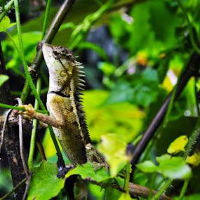 Hunting by Azwan Abdul Aziz - Animals Reptiles