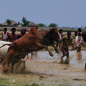 The Bull Tamer by Debdatta Chakraborty - News & Events World Events ( photojournalism, candid )