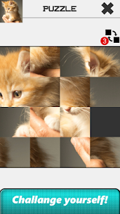Cat Slide Puzzle for PC-Windows 7,8,10 and Mac apk screenshot 4