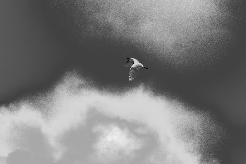 Volare di Legolax