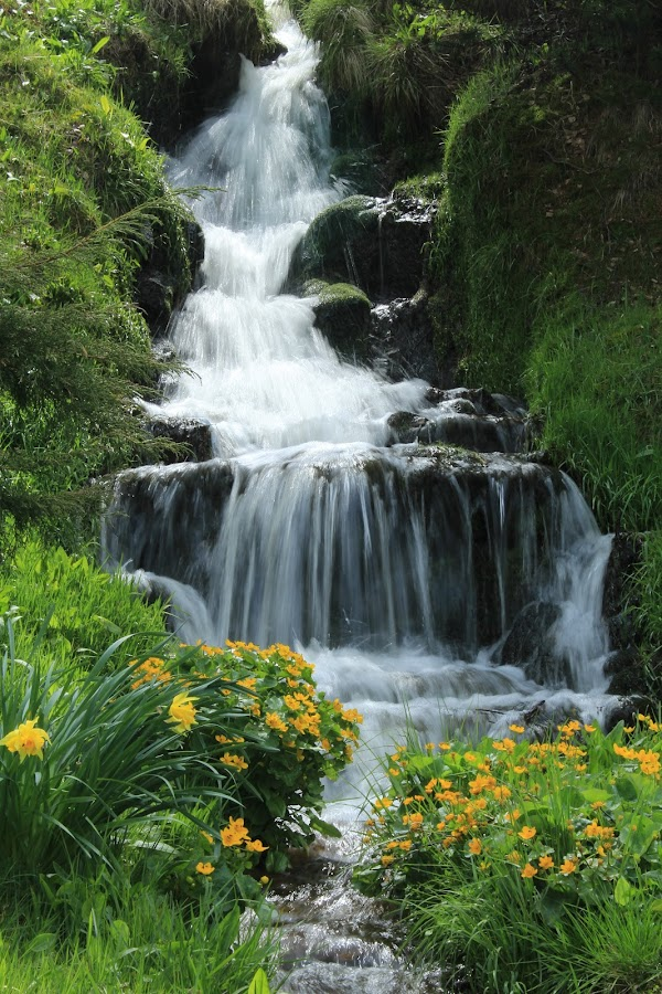 letní vodopád by Jarka Hk - Nature Up Close Water ( water, waterfall, nice, summer, flowers )