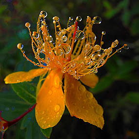 Wet Weather. by Dave  Horne - Flowers Tree Blossoms