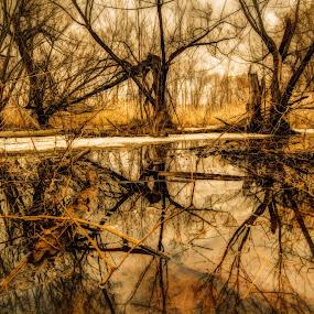 by Joe Hamel - Landscapes Forests