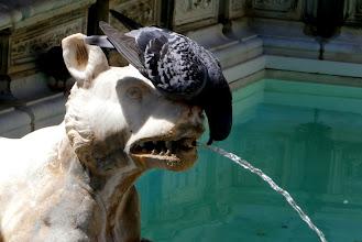 Photo: Fragment Fonte Gaia [Radosna Fontanna] na Piazza del Campo w Sienie
