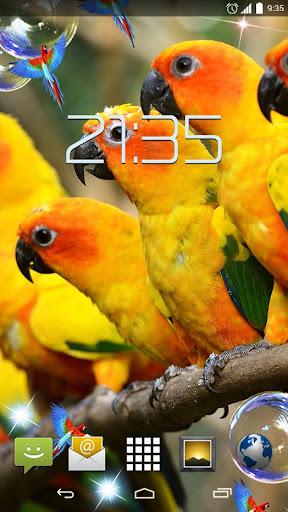 Colorful Parrots HD Live