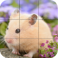 Puzzle - Cute Hamsters