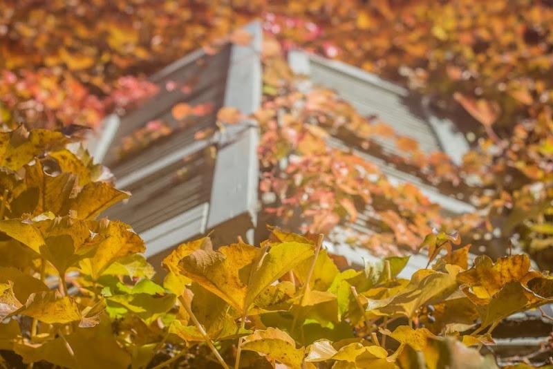 Finestra d'autunno di poppy