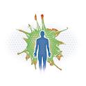 Fascia IV 2015 icon