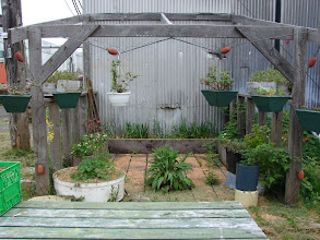Photo: The hanging gardens of Namu.