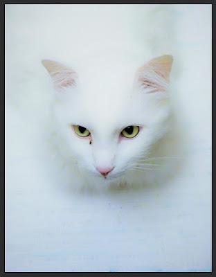 White over white. di matteo_maurizio_mauro