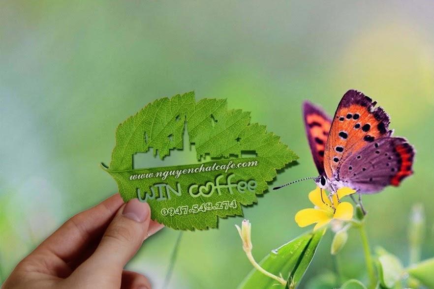 Cà phê nguyên chất 100% Buôn Ma Thuột, cà phê an toàn cho sức khỏe