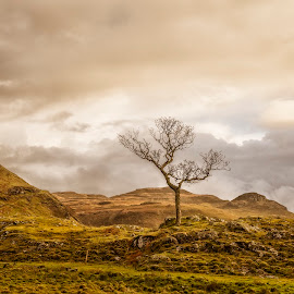 Sole Survivor by Ian Pinn - Landscapes Mountains & Hills ( alone, mountains, tree, winter, mull, scotland,  )
