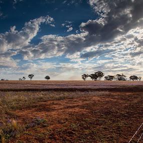Leeton by Brett Florence - Landscapes Prairies, Meadows & Fields ( sky, tree, bright, cloud, sun )