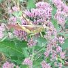Bird Grasshopper