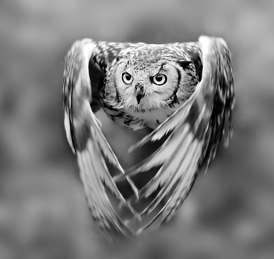 Give me your eyes by Stefano Ronchi - Black & White Animals