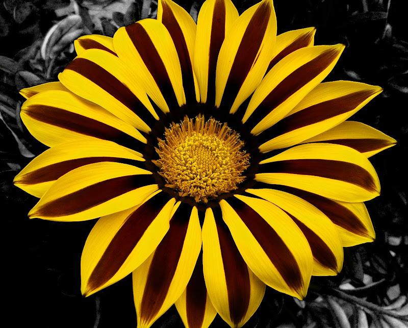 Power to Yellow di _Chiara_