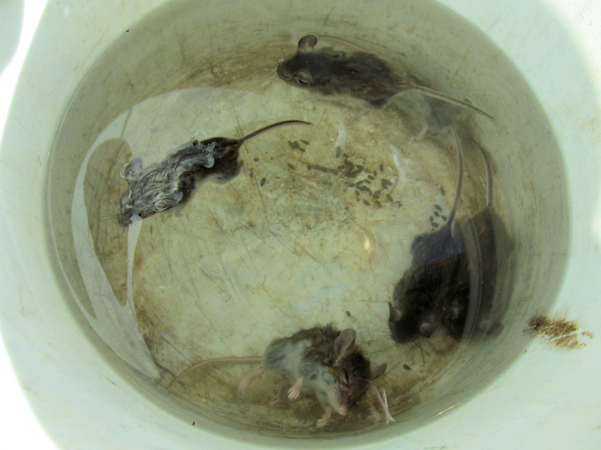 Photo: Six dead mice