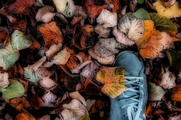 Ciao autunno di gattopisa