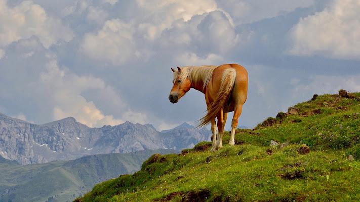 Cavallo di Battaglia di giuseppedangelo