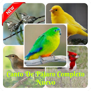 Download Canto Do Chanchao Completo For PC Windows and Mac apk screenshot 1