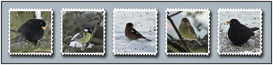 Photo: 25. december 2010 - Lidt fugle :-)