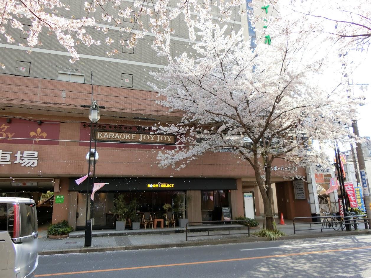 藤が丘駅周辺桜吹雪