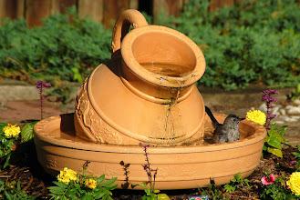 Photo: Day 80 ... Our backyard fountain