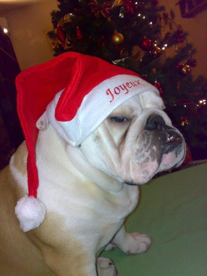 Natale Bullo di Mary_Ella